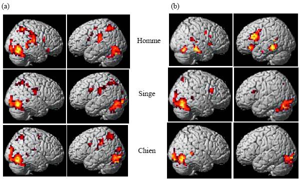 Pris de buccino et al 2004a for Neurone miroir autisme